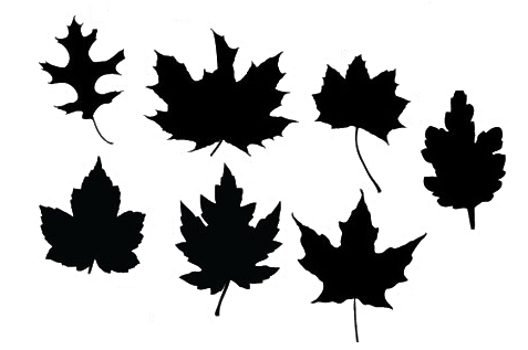 Maple Vector Leaf
