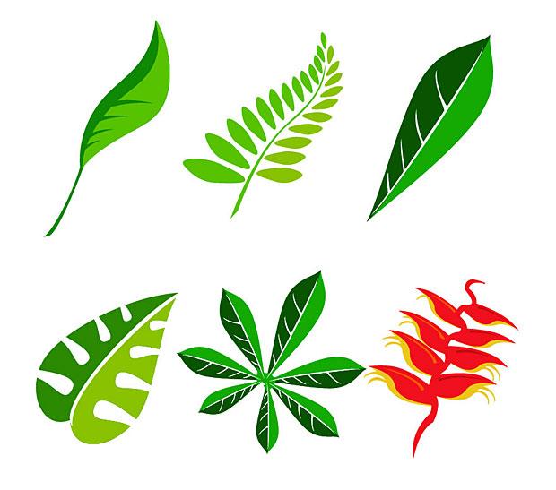 leavesillustrations.jpg Jungle Leaf Vector Graphics