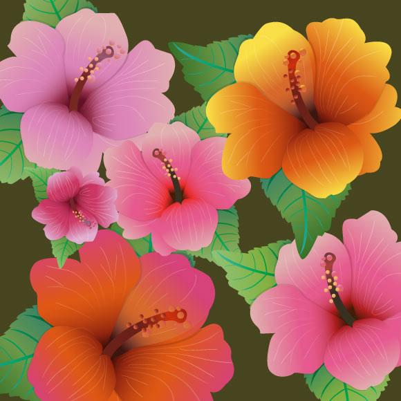 Hibiscus Vector Flowers