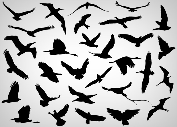 30 Silhouettes Vector Birds