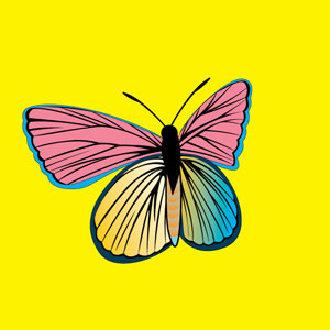 Colorful Vector Butterly