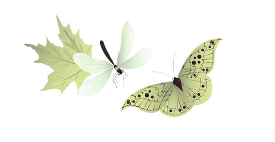 Dragonfly Vector Graphic