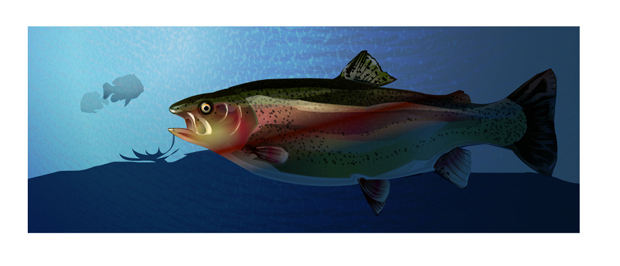 Trout Vector Fish