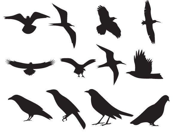 Birds Vector Silhouette