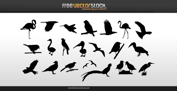 Vector Collection of Birds Silhouettes