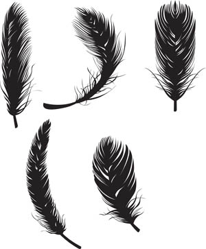 Feathers Vector Graphic