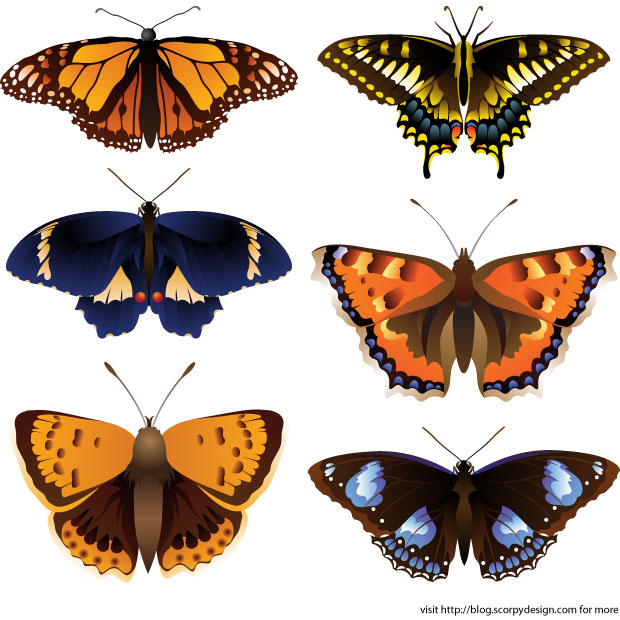 Vector Butterflies Species