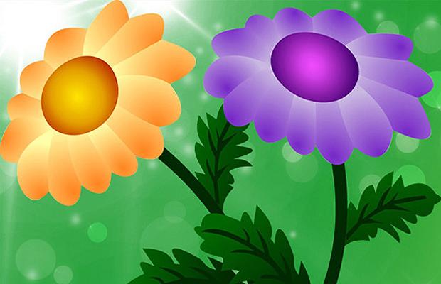 Chrysanthemum Vector Art